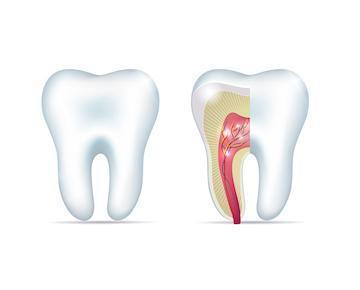 Root Canal Diagram | Allentown PA