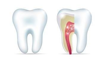 Root Canal Diagram | Allentown PA Dentist